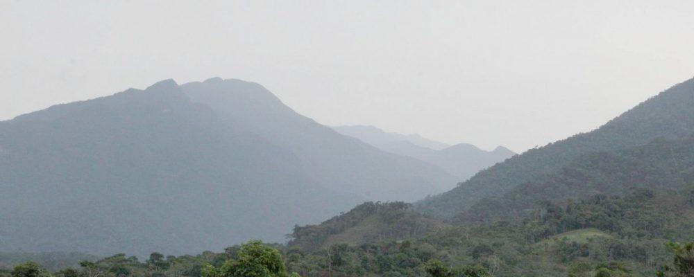 Bosque de Mishollo, el camino hacia una concesión para conservación